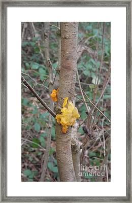 Tree Fungus Framed Print by John Williams