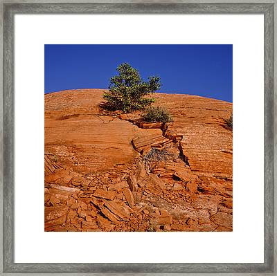 Tree Growing On Rock Face Framed Print by Panoramic Images