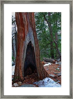Tree Hollow Framed Print by Peter Tellone