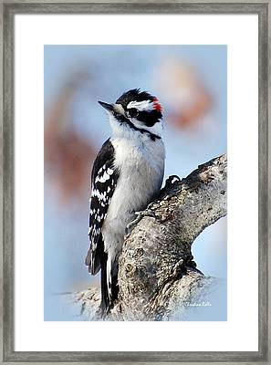 Tree Huggin' Nut Lover Framed Print by Christina Rollo
