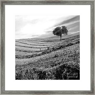 Tree In A Mowed Field. Auvergne. France Framed Print by Bernard Jaubert
