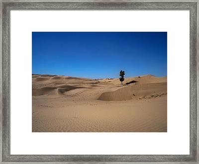 Tree In Desert Framed Print by Michael Fitzpatrick