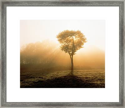 Tree In Early Morning Mist Framed Print by Panoramic Images