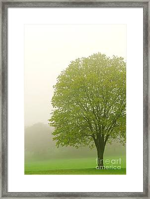 Tree In Fog Framed Print by Elena Elisseeva