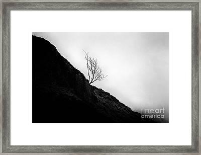 Tree In Mist Framed Print by John Farnan