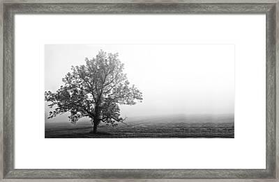 Tree In The Fog Framed Print by Andrew Soundarajan
