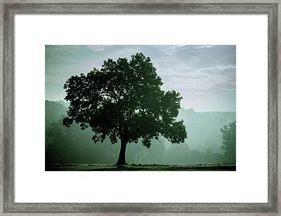 Tree In The Fog Framed Print by Wladimir Bulgar