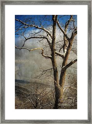 Tree In Winter Framed Print by Lois Bryan