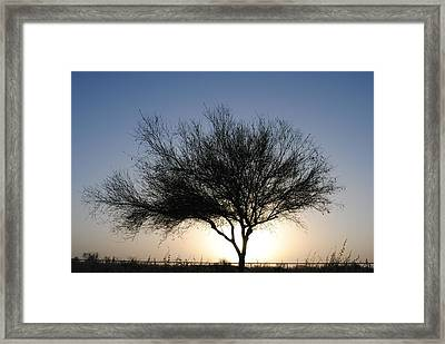 Tree Line Silhouette  Framed Print by Edward Curtis