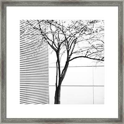Tree Lines Framed Print by Darryl Dalton