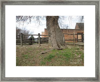 Tree Near The Gaol Framed Print by Ezra Hoek
