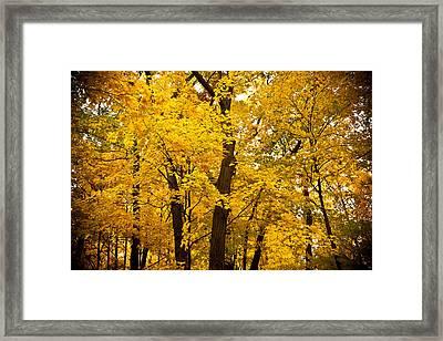 Tree Of Gold Framed Print by Kamil Swiatek