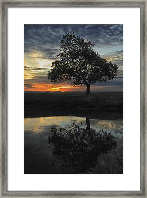 Tree Of Life 2 Framed Print by Mark Anthony Bansag