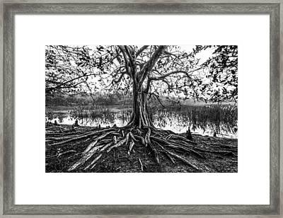 Tree Of Life Framed Print by Debra and Dave Vanderlaan