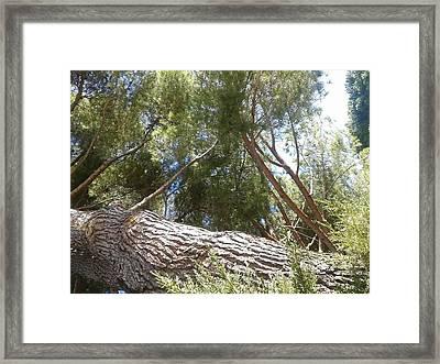 Tree Of Life II Framed Print by Andreea Alecu