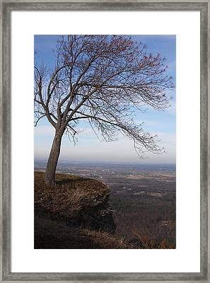 Tree On A Mountain Edge Framed Print by Vadim Levin