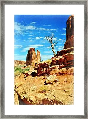 Tree On Park Avenue Framed Print by Marty Koch