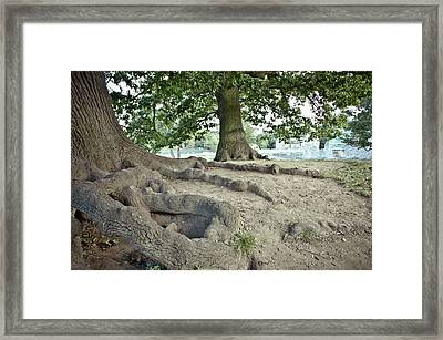 Tree Roots Framed Print by Tom Gowanlock