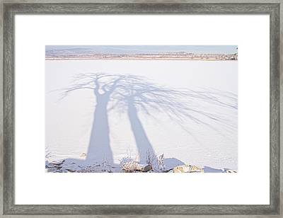 Tree Shadow Puppets Framed Print by James BO  Insogna