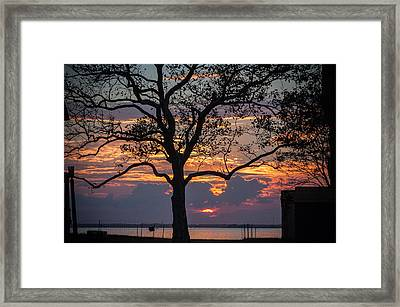 Tree Silhouette Framed Print by Kristopher Schoenleber