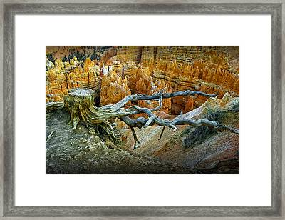 Tree Stump On A Ridge In Bryce National Canyon Framed Print by Randall Nyhof