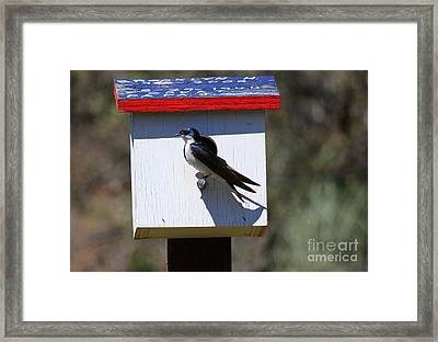 Tree Swallow Home Framed Print by Mike  Dawson