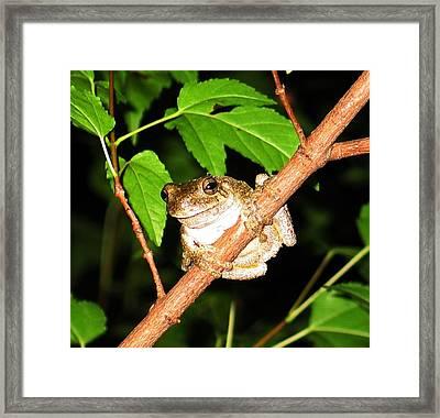 Tree Toad Night Framed Print by Tamara Stickler