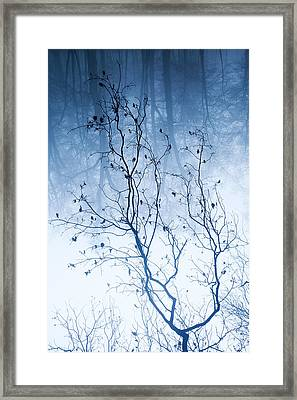 Tree Vs Forest Framed Print by Daniel Zrno