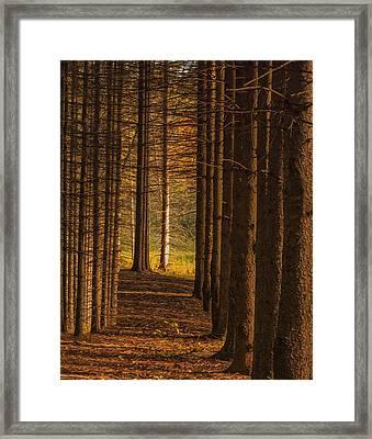 Treeline  Framed Print by Jack Zulli
