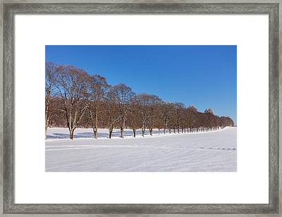 Treelined In A Snow Covered Field Framed Print by Panoramic Images