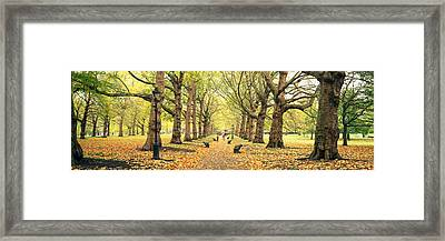Trees Along A Footpath In A Park, Green Framed Print by Panoramic Images