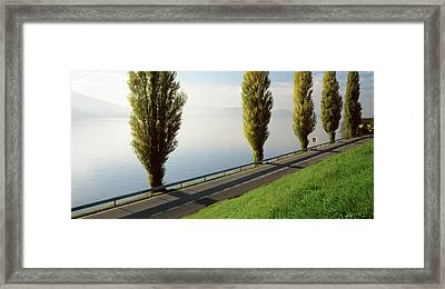 Trees Along A Lake, Lake Zug Framed Print by Panoramic Images