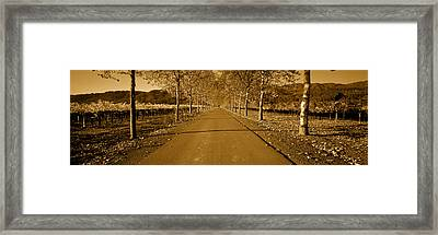 Trees Along A Road, Beaulieu Vineyard Framed Print by Panoramic Images