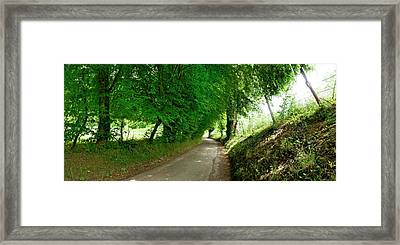 Trees Along A Road Framed Print by Panoramic Images