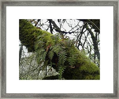 Trees And Ferns And Moss Ecosystem Framed Print by Lizbeth Bostrom