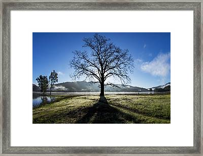 Trees Are Us Framed Print by Sean Foster