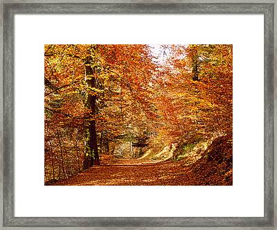 Trees At Huelgoat Forest In Autumn Framed Print by Panoramic Images