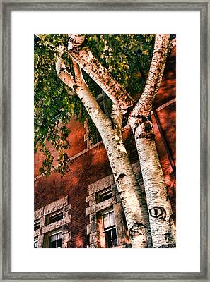Trees At Night Framed Print by HD Connelly