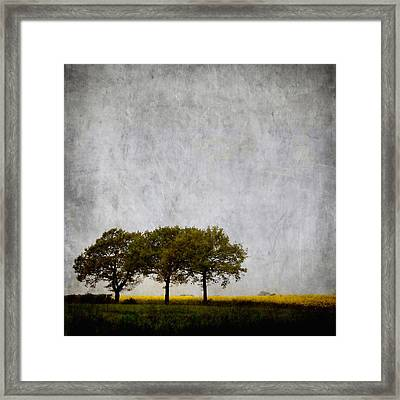 Trees At Sunrise Framed Print by Carol Leigh