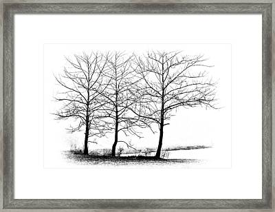 Trees At Water's Edge Framed Print by Tom Mc Nemar