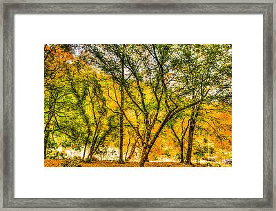 Trees By A Spring Framed Print by Fred Adsit