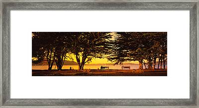 Trees In A Field, Crissy Field, San Framed Print by Panoramic Images