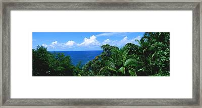 Trees In A Forest On The Coast, Hamakua Framed Print by Panoramic Images