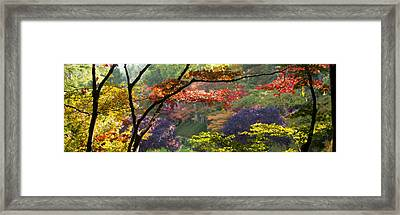Trees In A Garden Butchart Gardens Framed Print by Panoramic Images