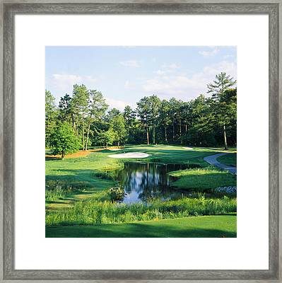 Trees In A Golf Course, Pine Needles Framed Print by Panoramic Images