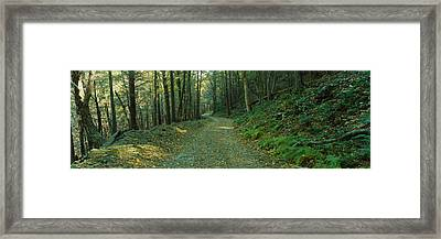 Trees In A National Park, Shenandoah Framed Print by Panoramic Images