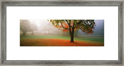 Trees In A Park, Djurgarden, Stockholm Framed Print by Panoramic Images