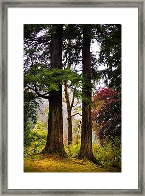 Trees In Autumn Glory. Scotland Framed Print by Jenny Rainbow