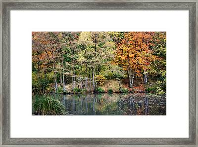 Trees In Autumn Framed Print by Natalie Kinnear