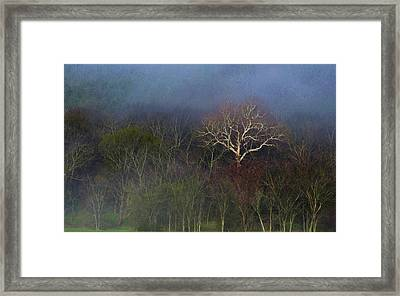 Trees In Fog 4 Framed Print by Dena Kidd